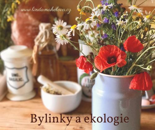 Bylinky a ekologie