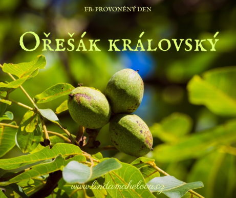 oresak-do-clanku